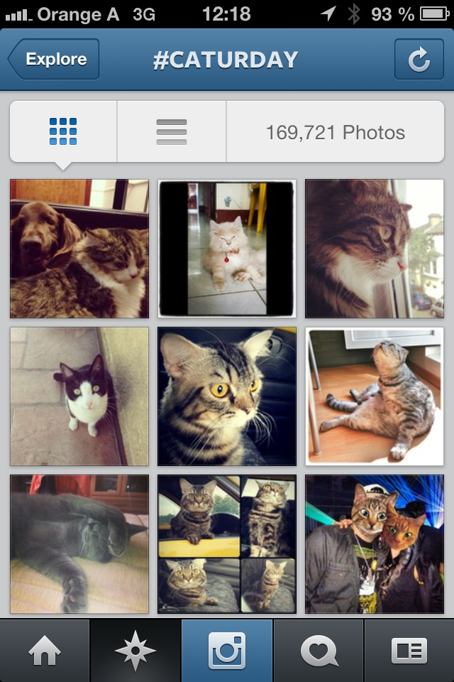 Hashtag #Caturday auf Instagram